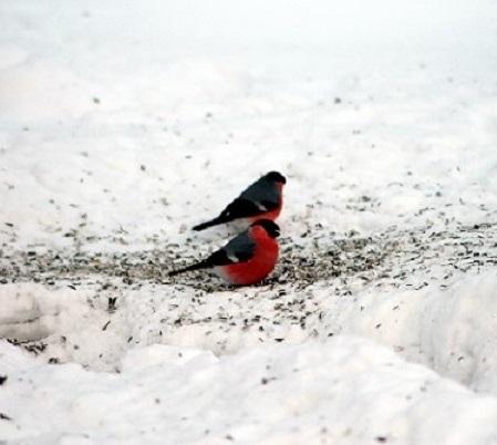 snow-bird-cc-matten79-web-v2