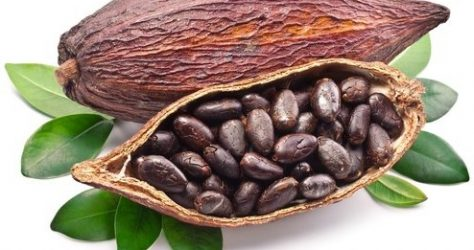 cacao image