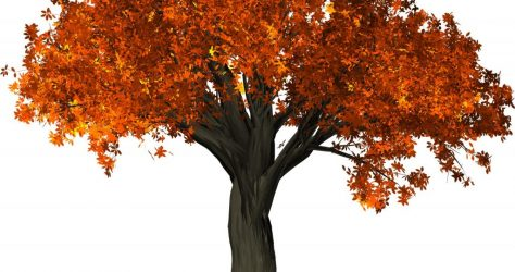 fall foliage tree